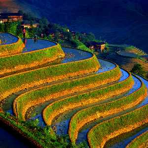 A stepped hillside in China, stunning greens and browns contrast against the blue of the canals dug into the side of the hill.