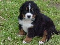 Xequa's new puppy, Einstein
